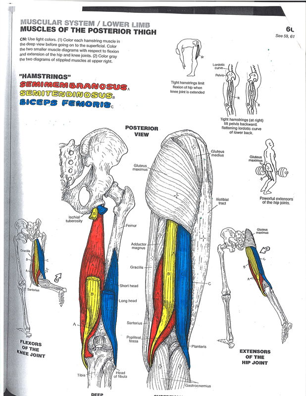 Amazing Anatomy Massage Therapy Image Collection - Human Anatomy ...